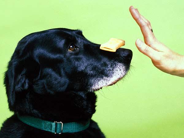dog-training-tip.jpg